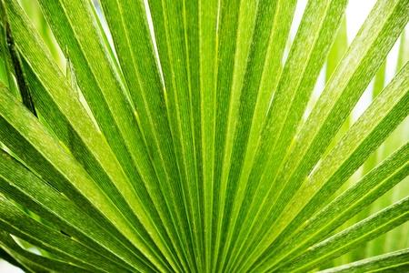 tropicana: Tropical Palm Background Photo. Tropical Leaf.