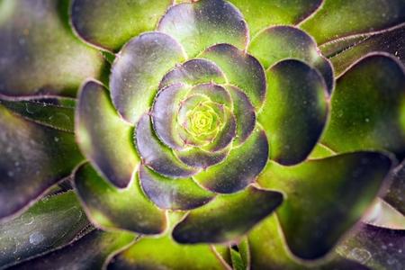 specie: Cactus Specie Closeup  Cactus Macro Photo  Stock Photo