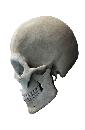 jaw: Skull with Jaw Side View 3D Skull Illustration.