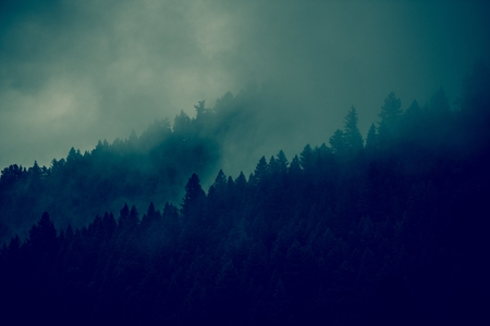 mystical forest: Foggy Forest Background. Forest Tree Lines Layers. Dark Green Color Grading. Stock Photo