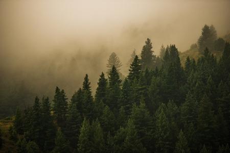 Foggy Colorado Forest. Mysterious Forest Landscape. Reklamní fotografie