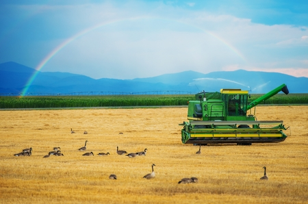 agriculture industrial: Colorado Harvesting. Modern Harvester and the Rainbow. Colorado, United States. Agriculture Theme.
