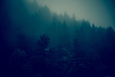 dark forest: Dark Foggy Forest Hills. Foggy Colorado Landscape in Dark Blue Color Grading. Stock Photo