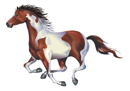 galloping: Galloping Spotted Horse Art Illustration Isolated on Solid White Background. Running Horse. Stock Photo