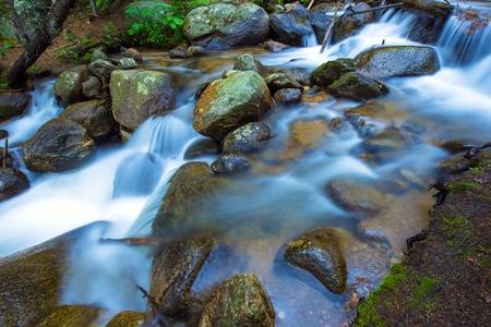 Mountain Rocky Stream Closeup Photo. Colorado Fauna and Flora.