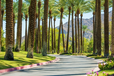 palm: Palm Springs Road, California, United States. Palm Trees.