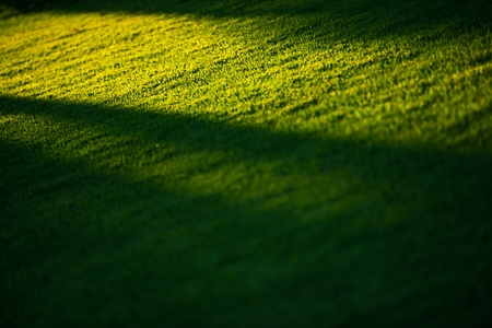 Grass Field and the Sunlight Nature Background.