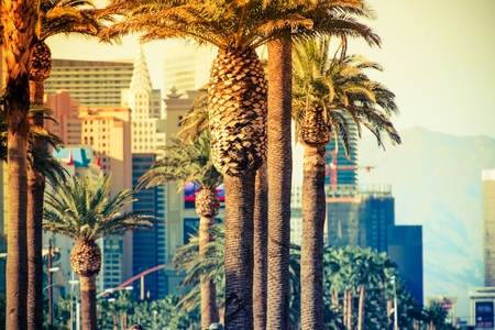 Las Vegas Strip Palms in Colorful Color Grading. Las Vegas, Nevada, United States. Stock Photo