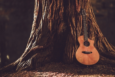 guitars: Acoustic Guitar and the Old Tree. Music Theme with Acoustic Guitar. Stock Photo