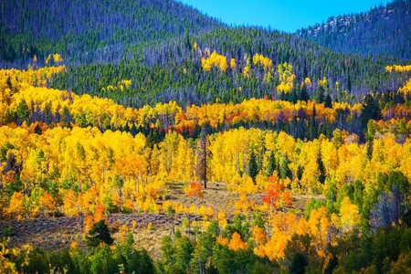 Colorful Colorado Autumn. Colorado October Landscape, United States. Stock Photo