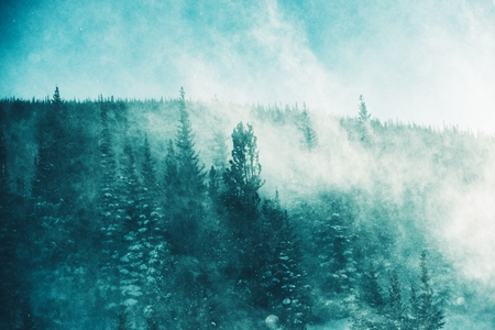 wind storm: The Winter Storm. Extreme Winter Storm Conditions with High Wind and Blowing Snow in the Forest. Winter Scenery Stock Photo