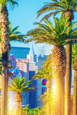 Las Vegas Strip Scenery. Vegas Palms and the Strip in Vertical Photography. Фото со стока