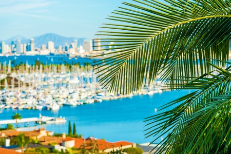Destination San Diego, California. Palm Leaf and Blurred San Diego Cityscape Concept Photo.