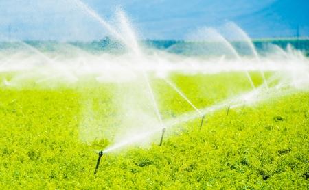irrigate: Farm Field Irrigation. Crop Irrigation in California Coachella Valley. Stock Photo