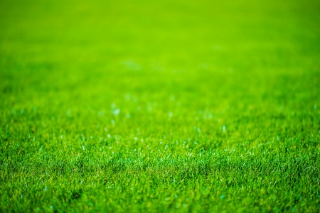 Grass Field Defocused Background Photo.