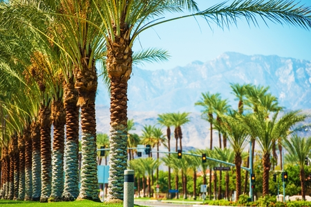 Palmas Camino del Valle de Coachella. Highway 111 en Indian Wells, California, EE.UU.. Foto de archivo - 35427378