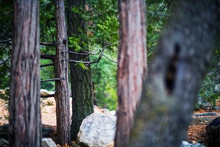 bernardino: San Bernardino Forest Closeup Photo. Idyllwild, Pine Cove Mountains, California, USA. Stock Photo