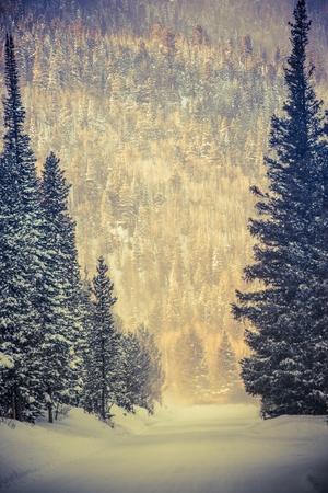 winter road: Winter Wonderland Road. Colorado Winter. Rocky Mountains, United States. Road Covered by Fresh Snow. Stock Photo