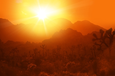 California Desert Heat. Hot Summer Day in Joshua National Park, California, United States. Zdjęcie Seryjne