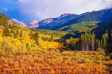 aspen tree: Scenic Aspen Lanscape. Colorado Rocky Mountains. Aspen, Colorado, United States.