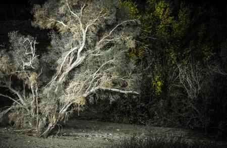 plantas del desierto: Noche del desierto. Plantas del desierto en la noche. Coachella Valley, al sur de California, Estados Unidos.
