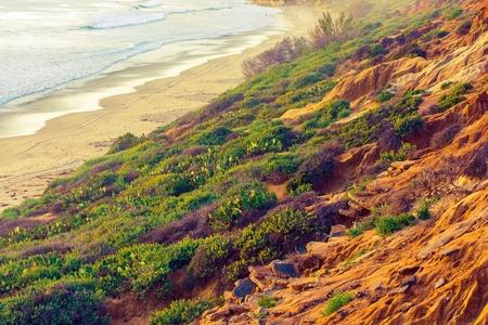 california beach: California Green and Sandy Ocean Shore. Beach Plants and Flowers. California, United States. Stock Photo