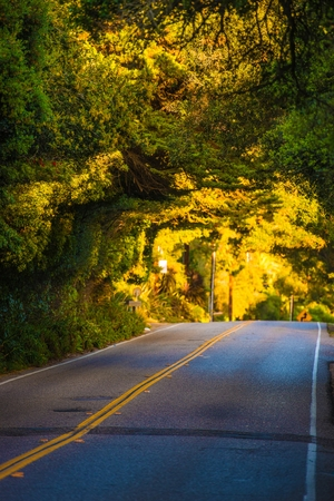 santa barbara: Scenic Santa Barbara, California Road Under Tree Branches. California, United States. Travel Photography.