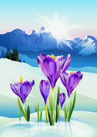 winter range: Spring in the Mountains Illustration. Crocus Flowers and the Winter Mountain Landscape. Signs of Coming Spring