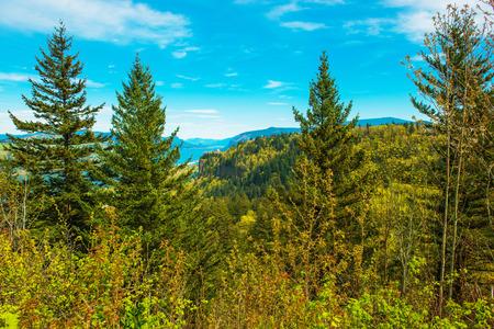 Green Oregon Landscape. Columbia River Gorge Vista. Oregon, United States. Stock fotó