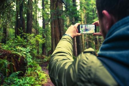 Tomar fotos usando el teléfono móvil. Fotografía móvil. Foto de turista toma del bosque de Redwood en el norte de California, Estados Unidos. Foto de archivo