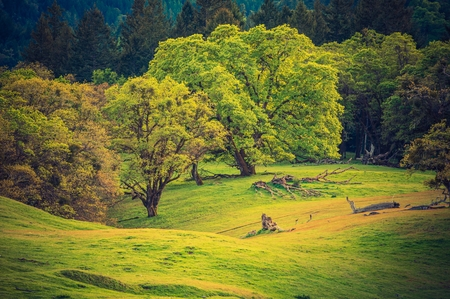 redwood: On the Forest Edge. North California Mendocino National Forest Landscape. Stock Photo