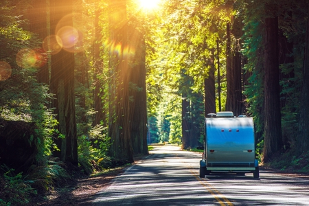 rv: Camping in Redwoods. Travel Trailer RV on the Redwood Highway. California RVing. Camper on the Road.
