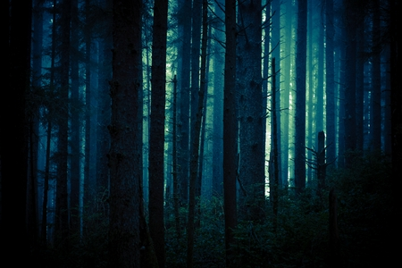 Dark, Foggy and Creepy Forest in Dark Blue Color Grading. Forest Backdrop.