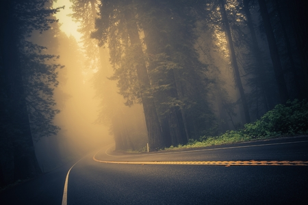 Foggy Forest Road. Redwood Highway, Californië, Verenigde Staten. Stockfoto - 39557386