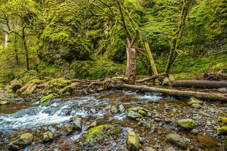 mossy: Mossy Oregon Creek. Columbia River Gorge Mossy Scenic Landscape