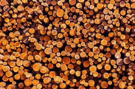 lumber industry: Pile of Lumber. Timber Industry Photo Background. Wooden Logs Pile.
