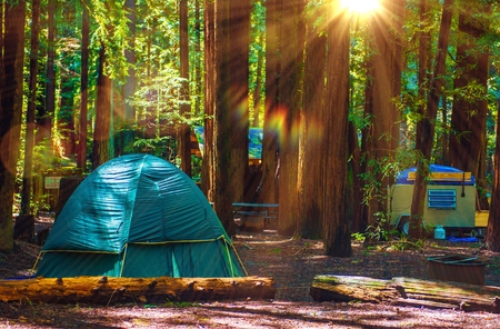 camping: Tent Camping in the Redwood National Park in California, United States. Forest Camping.