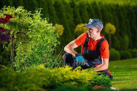 jardinero: Diseñador Jardín Creativo. Jardinero Profesional Pensamiento en su diseño del jardín. Hombres Trabajando.