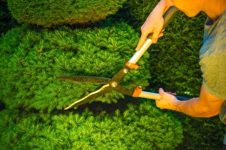 Plant Trimmen in een tuin. Heggenschaar in actie.