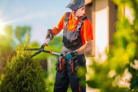garden: Professional Gardener Trimming Plants in the Garden. Gardener Using Bush Trimmer. Stock Photo