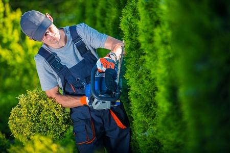 Heckenschere Works. Gärtner mit Benzin-Heckenschere Shaping Wall of Lebensbäume. Lizenzfreie Bilder