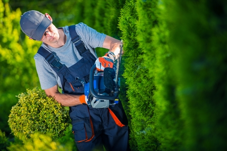 obrero trabajando: Hedge Trimmer Works. Jardinero con Hedge Trimmer Gasolina Shaping Muralla Thujas.