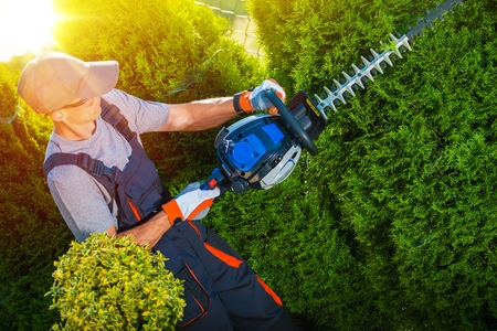 hedge: Gardener with Professional Gasoline Hedge Trimmer at Work.