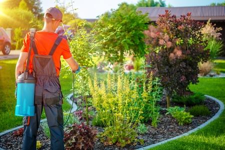 jardineros: Jardinero con plagas Rocíe Foto de archivo