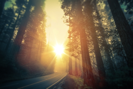 redwood: Scenic Foggy Redwood Forest Road. California, United States. Stock Photo