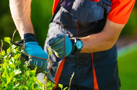 Professional Gardener Trimming Flowers. Reklamní fotografie