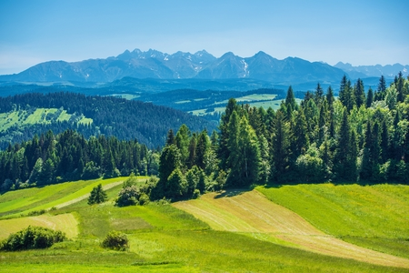 carpathian mountains: Summer Landscape in Lesser, Poland
