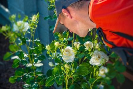 smelling: Gardener Smelling Roses. Checking on Flowers. Gardening Theme.