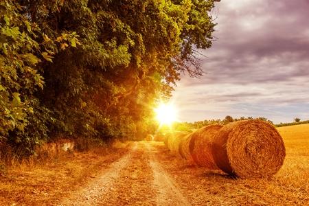 paisaje rural: Soleado camino del campo en julio. Austria, Europa Camino del campo con balas de heno Foto de archivo
