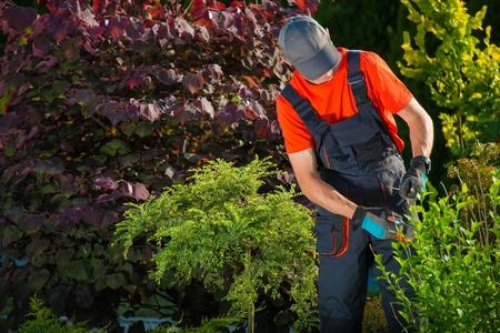 clonacion: Jardinero de trabajo en un jard�n. El corte de la planta, tambi�n conocido como golpear o clonaci�n. Foto de archivo
